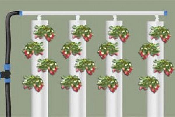 Схема полива клубники в трубах ПВХ