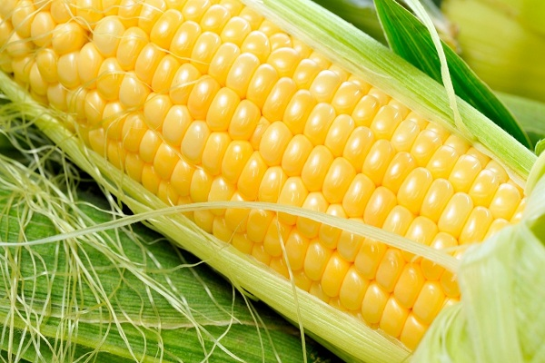 Кукуруза сорт добрыня