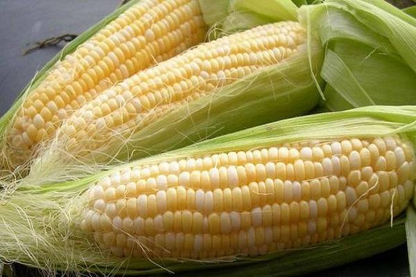 Кукуруза сорта стерлинг