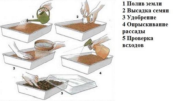 Клубника схема посадки