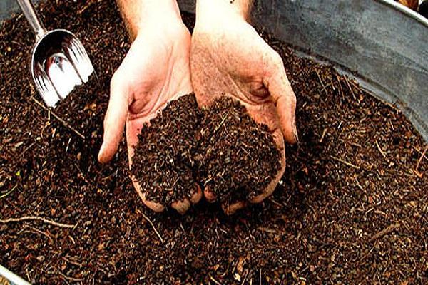 Удобрение для помидор (компост)