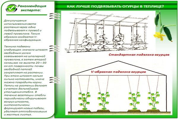 Схема подвязки огурцов