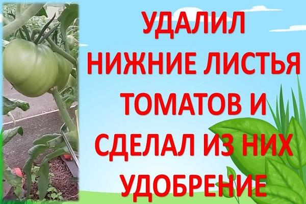 Удаление листвы с помидор