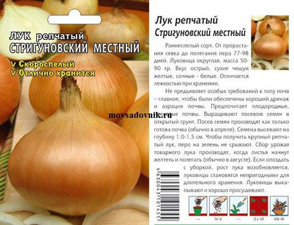 Сорт лука Стригуновский