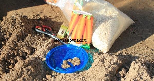 Подзимний посев моркови