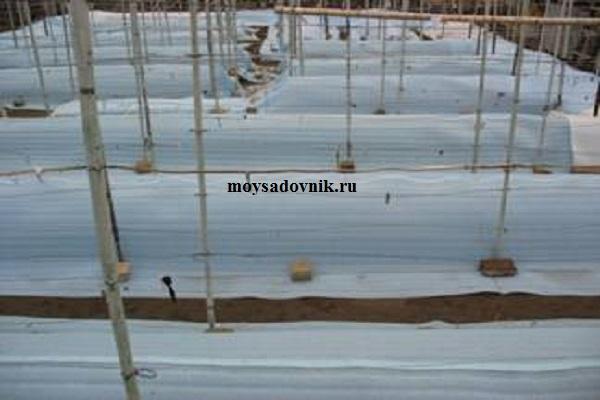 Укрытие винограда подложкой для ламината