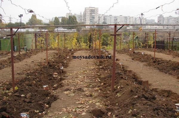 Укрытие винограда землей
