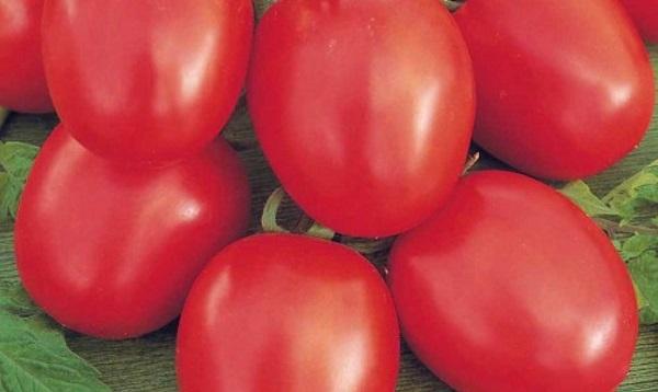 Сорт помидор Бенито