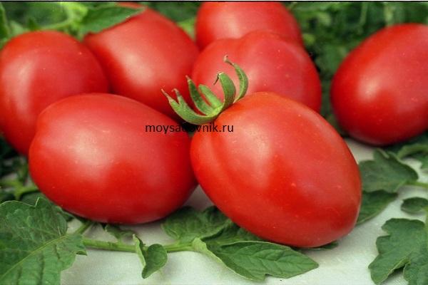 Сорт томатов ДеБарао