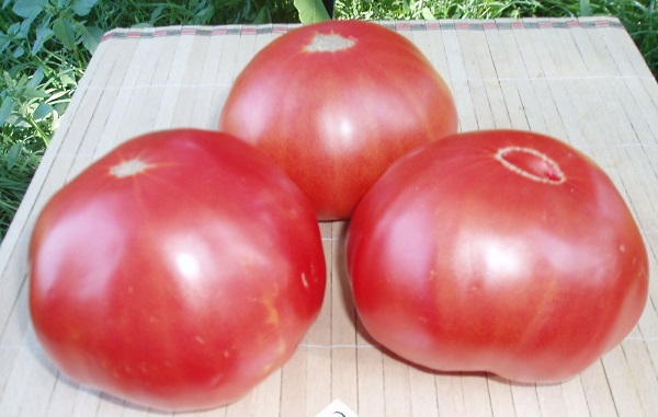 Сорт помидор Микадо розовый