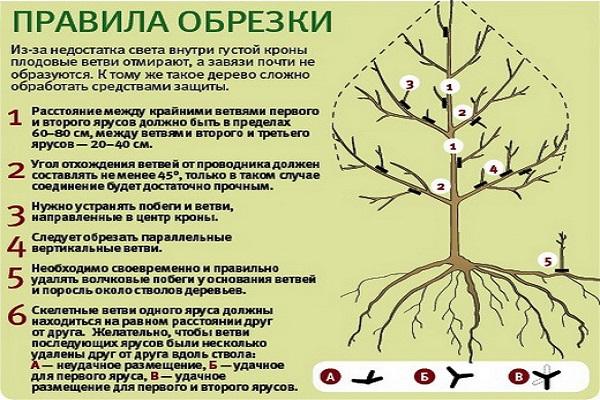 Весенняя обрезка плодовых деревьев
