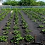 Агроволокно и технологии его использования